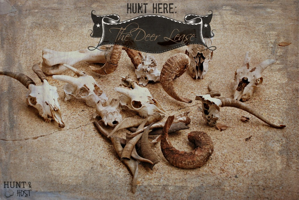 hunt here deer lease