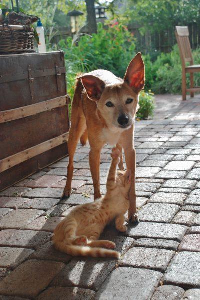 Rusty dog hunt and host