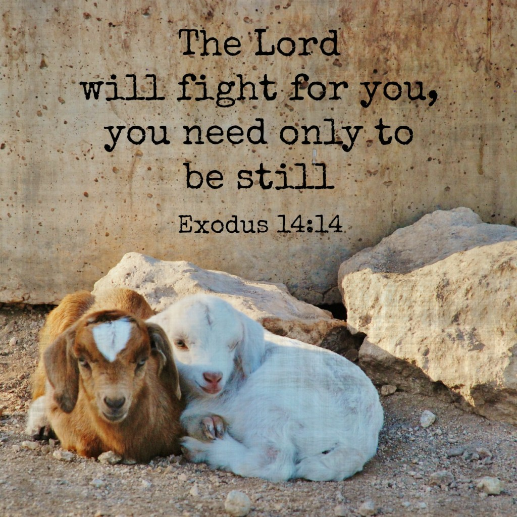 The Lord will fight for you; you need only to be still. Exodus 14:14 Memory verse challenge www.huntandhost.net
