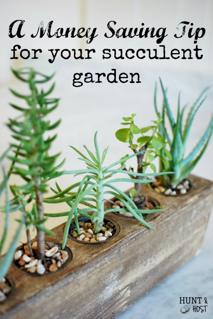 Mexican sugar molds make gorgeous succulent gardens. Check out this simple money saving tip to bring your succulent garden to life. www.huntandhost.net