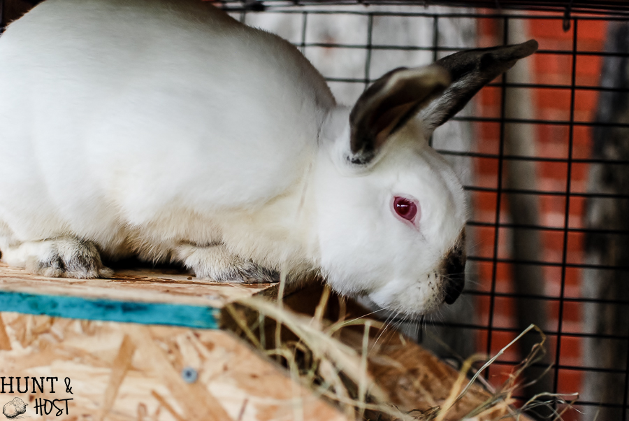 The tale of God's mercy told through Rudy the red eyed rabbit, our Christmas bunny.