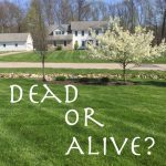 Protect Your Roots: Dead or Alive. Part of the Grow Your Faith series from Hunt & Host blog.