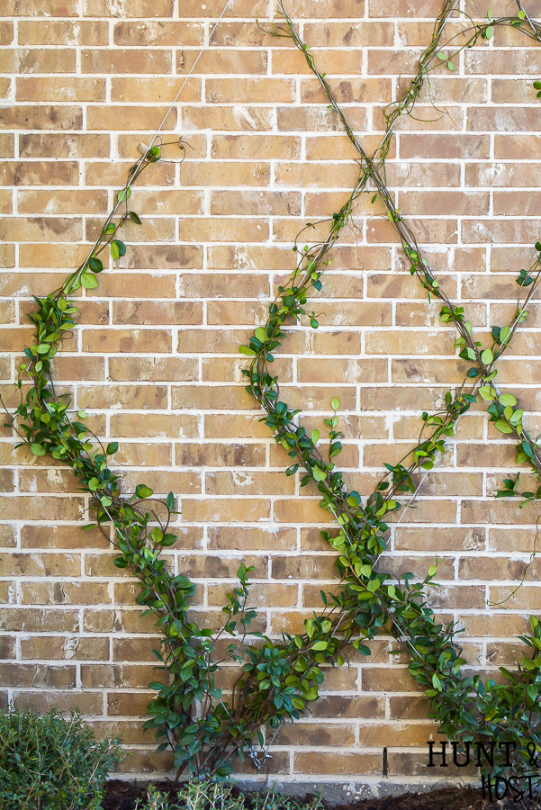 Add a gorgeous focal point to your landscape by adding this diamond patterned wire trellis to your yard. Easy DIY wire trellis you can complete in an afternoon along with a trellis plant selection idea list! #tellis #gardentip #DIYlandscape #trellisplants #englishgarden