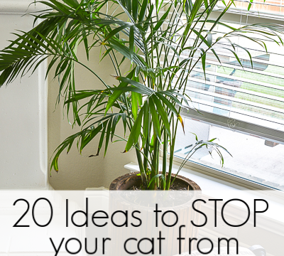 20 ideas to get your cat to stop peeing in your house plants. Potted plants make a fun litter box for cats but frustration for cat lovers. Here is a massive lists of ideas to test out to stop your kitty from going pee in your plants! #badkitty #cattips #littertraining #plantlady #plantlover